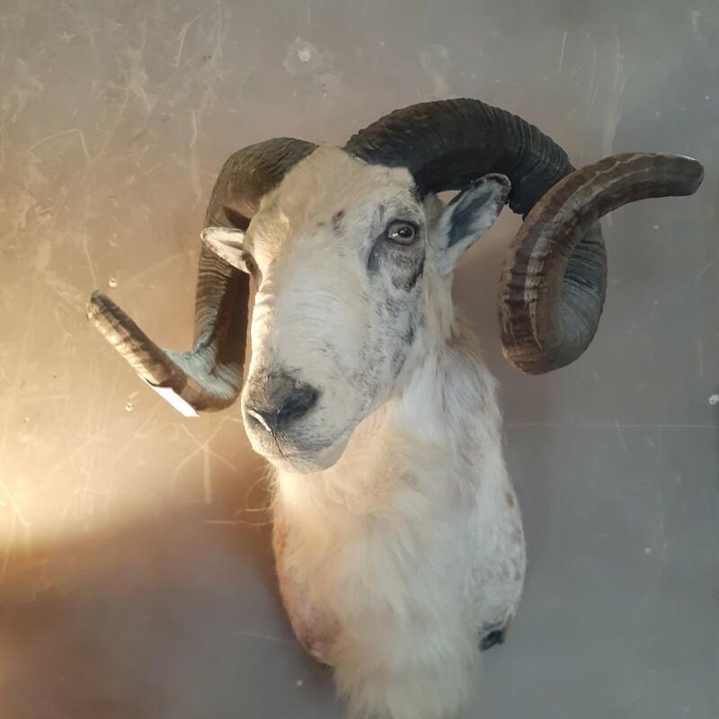 Ram Head Mount