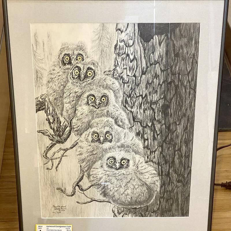 Print Owls Dan Beard